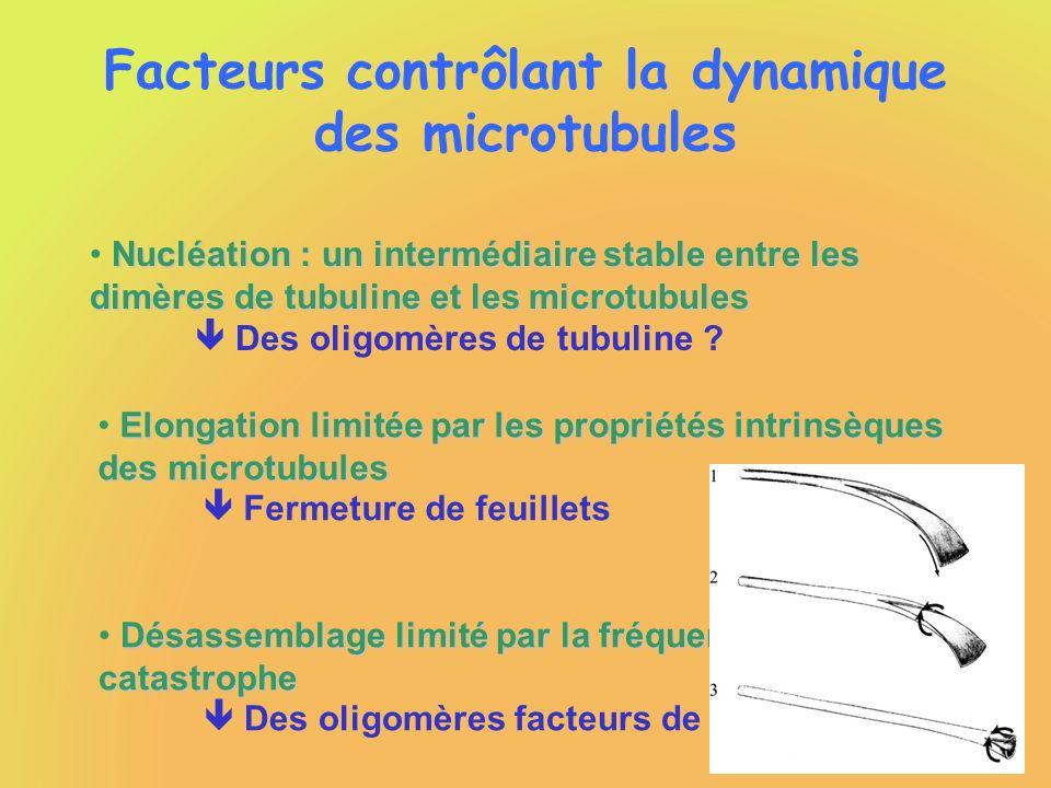 Facteurs contrôlant la dynamique des microtubules Nucléation : un intermédiaire stable entre les dimères de tubuline et les microtubules Des oligomère
