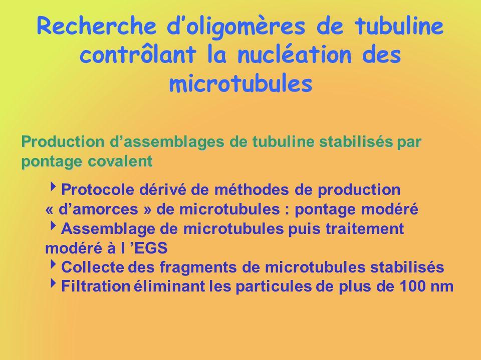 Recherche doligomères de tubuline contrôlant la nucléation des microtubules Production dassemblages de tubuline stabilisés par pontage covalent Protoc
