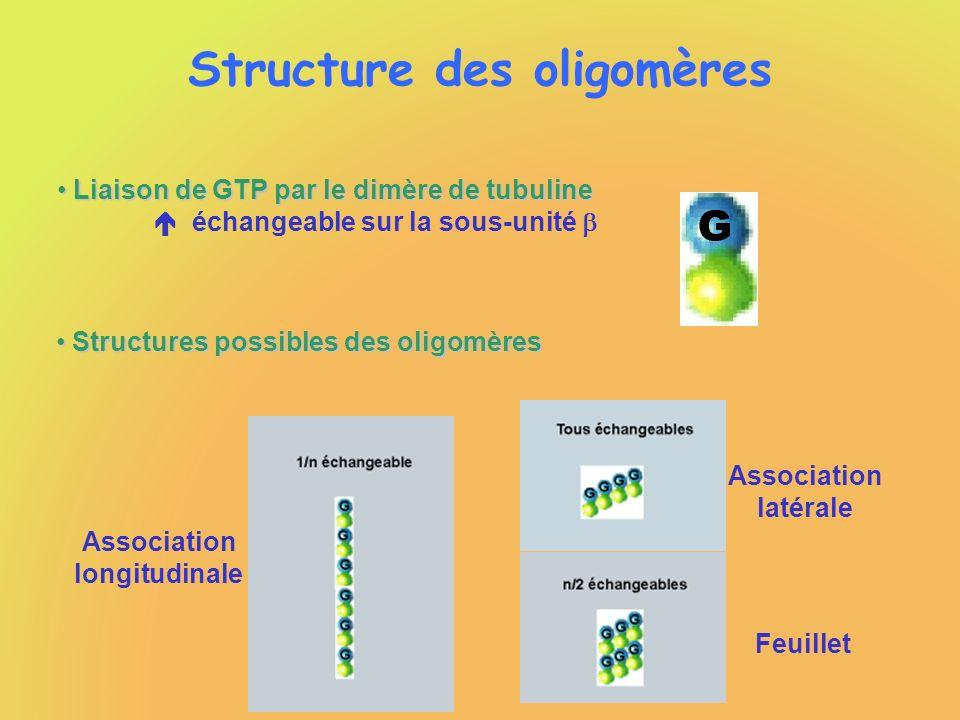 Structure des oligomères Liaison de GTP par le dimère de tubuline Liaison de GTP par le dimère de tubuline échangeable sur la sous-unité Structures po