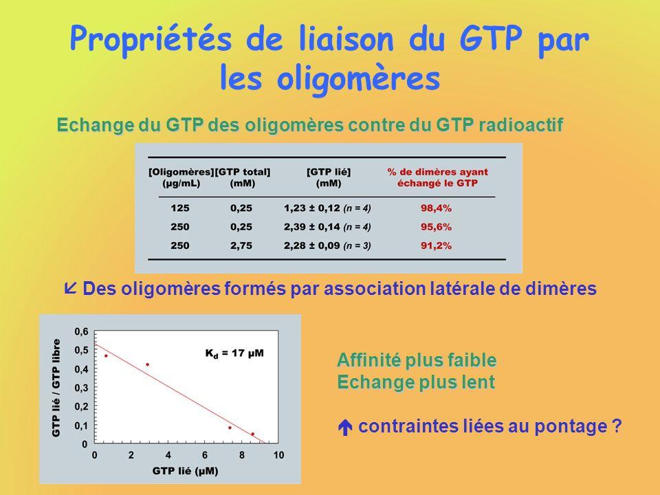 Propriétés de liaison du GTP par les oligomères Echange du GTP des oligomères contre du GTP radioactif Des oligomères formés par association latérale