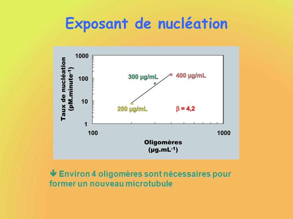Environ 4 oligomères sont nécessaires pour former un nouveau microtubule Environ 4 oligomères sont nécessaires pour former un nouveau microtubule