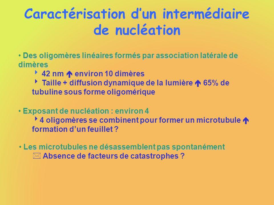 Caractérisation dun intermédiaire de nucléation Des oligomères linéaires formés par association latérale de dimères 42 nm environ 10 dimères Taille +