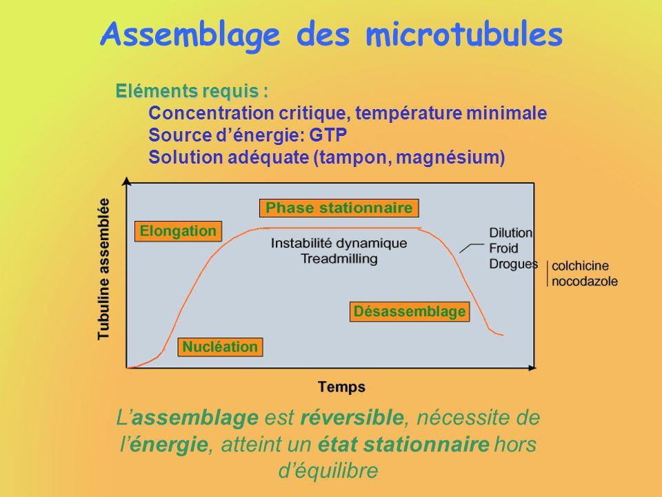 Assemblage des microtubules Lassemblage est réversible, nécessite de lénergie, atteint un état stationnaire hors déquilibre Eléments requis : Concentr