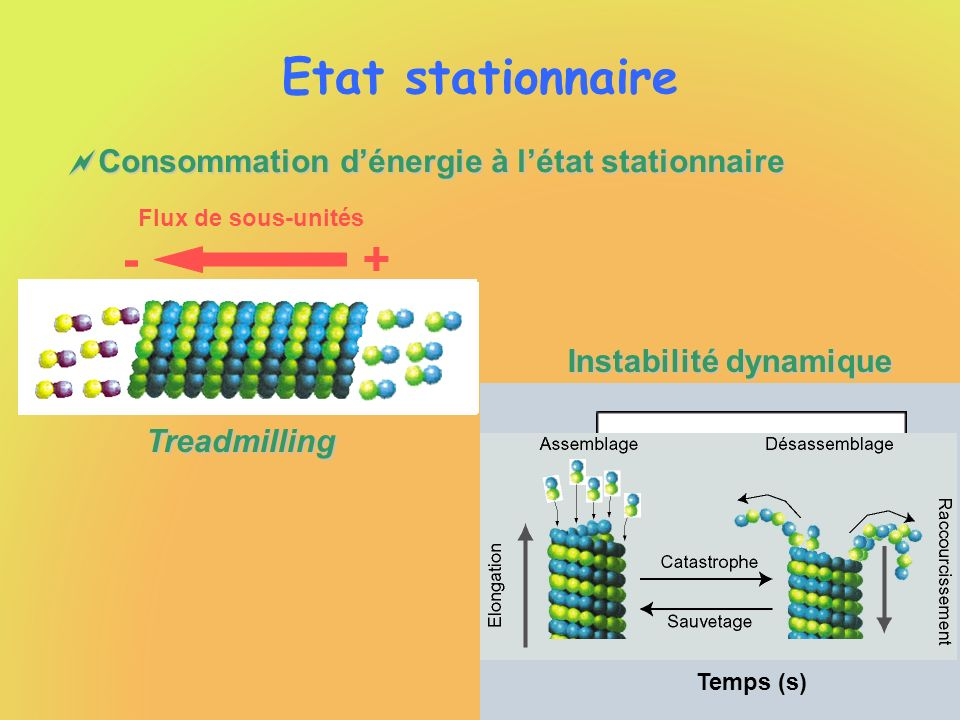 Instabilité dynamique Etat stationnaire Consommation dénergie à létat stationnaire Consommation dénergie à létat stationnaire Flux de sous-unités 2000