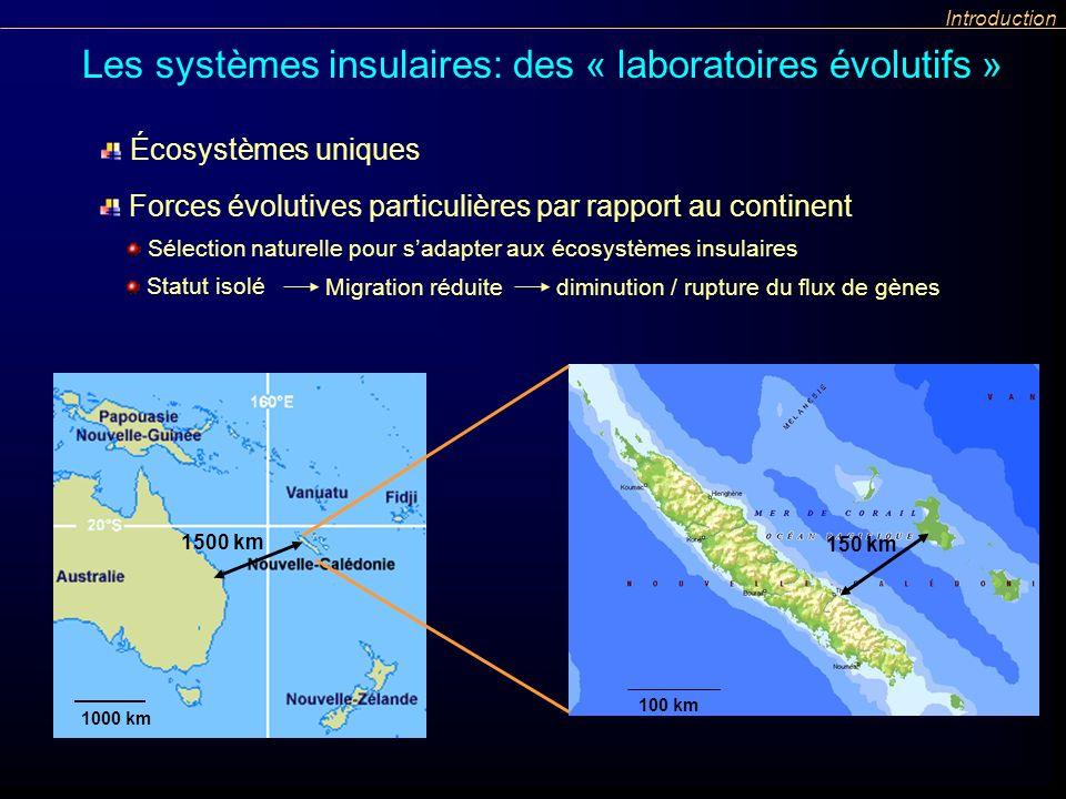 Statut isolé Migration réduite diminution / rupture du flux de gènes Introduction Les systèmes insulaires: des « laboratoires évolutifs » 1000 km 100