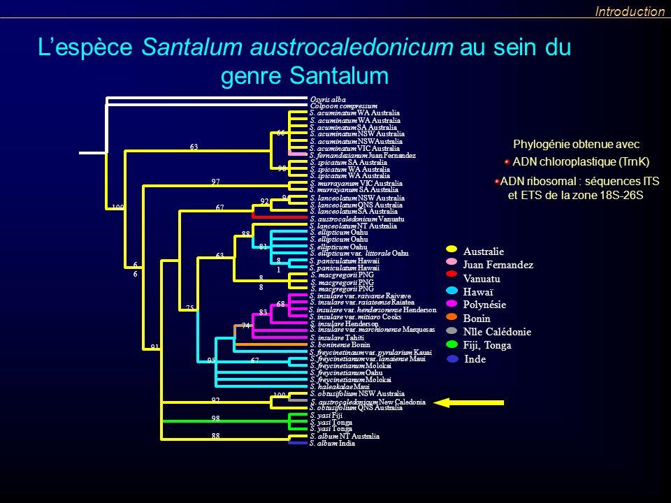 Lespèce Santalum austrocaledonicum au sein du genre Santalum Introduction ADN chloroplastique (TrnK) ADN ribosomal : séquences ITS et ETS de la zone 1