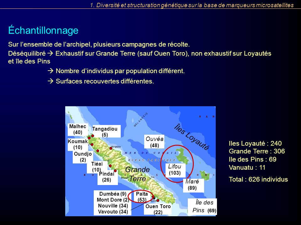 Échantillonnage Sur lensemble de larchipel, plusieurs campagnes de récolte. Iles Loyauté : 240 Grande Terre : 306 Ile des Pins : 69 Vanuatu : 11 Total
