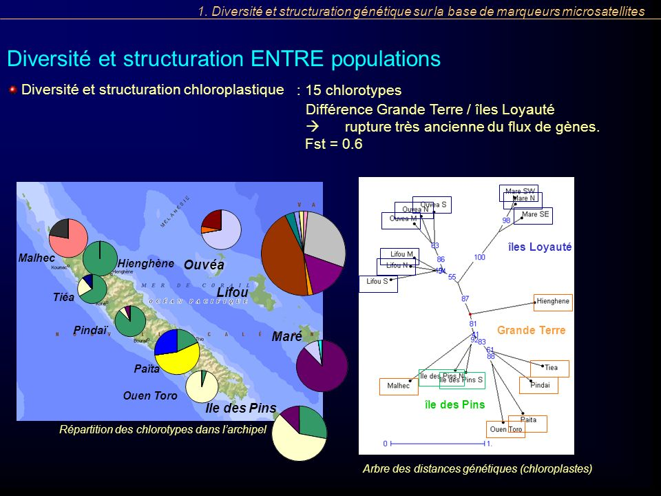 Diversité et structuration ENTRE populations Diversité et structuration chloroplastique : 15 chlorotypes Différence Grande Terre / îles Loyauté ruptur