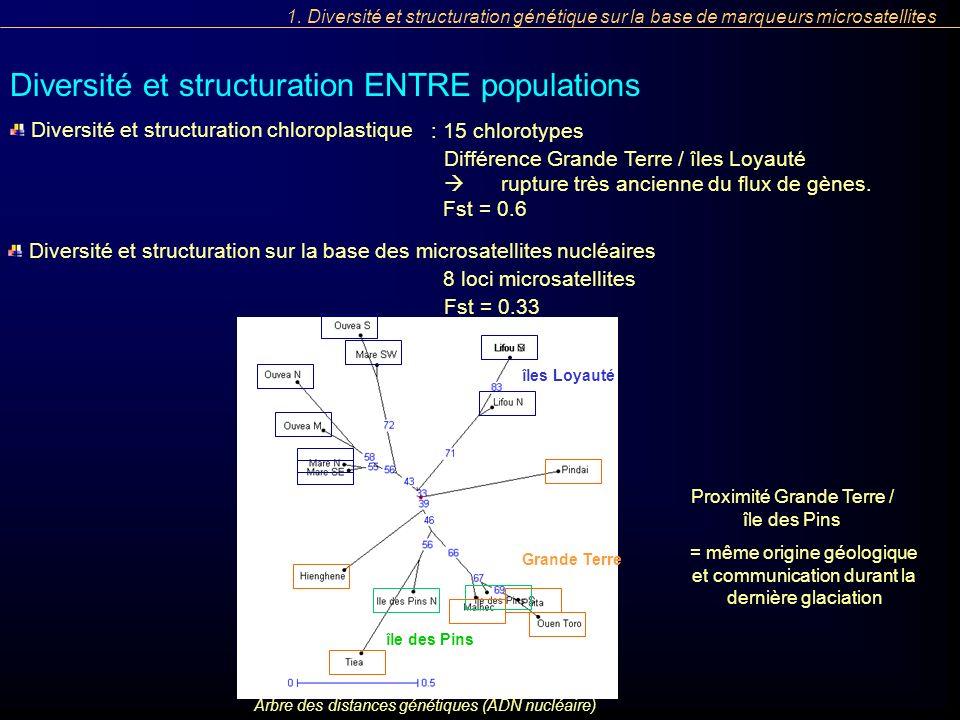 : 15 chlorotypes Différence Grande Terre / îles Loyauté rupture très ancienne du flux de gènes. Diversité et structuration sur la base des microsatell