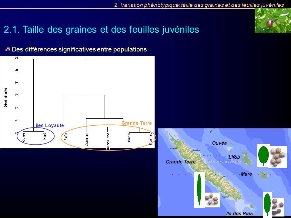 îles Loyauté Grande Terre 2.1. Taille des graines et des feuilles juvéniles 2. Variation phénotypique: taille des graines et des feuilles juvéniles De
