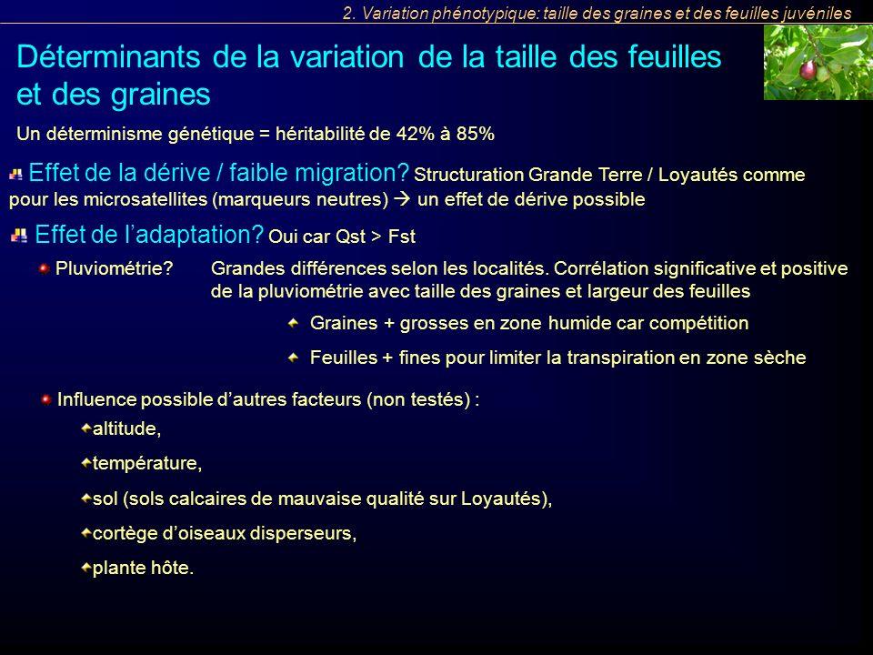 Influence possible dautres facteurs (non testés) : Un déterminisme génétique = héritabilité de 42% à 85% Déterminants de la variation de la taille des