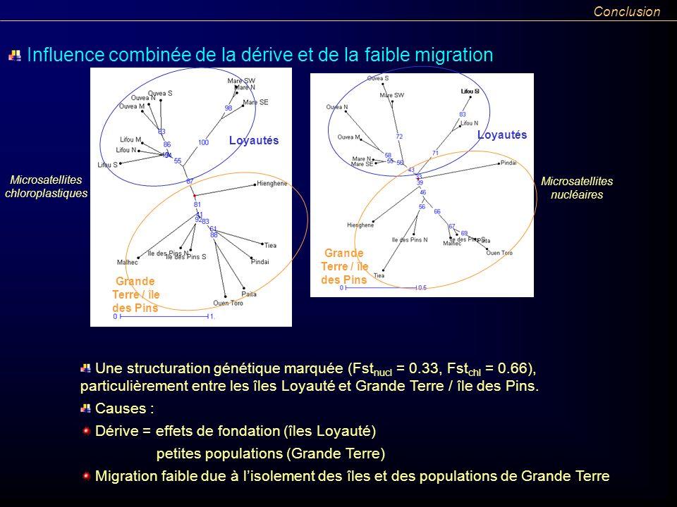 Une structuration génétique marquée (Fst nucl = 0.33, Fst chl = 0.66), particulièrement entre les îles Loyauté et Grande Terre / île des Pins. Influen