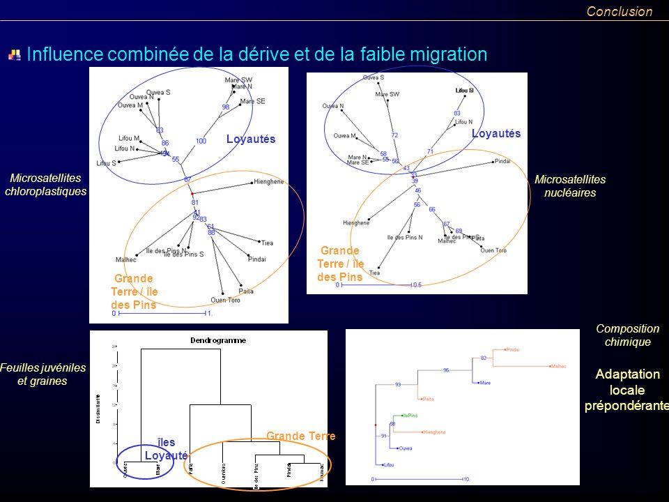 Loyautés Grande Terre / île des Pins îles Loyauté Grande Terre Microsatellites chloroplastiques Microsatellites nucléaires Feuilles juvéniles et grain