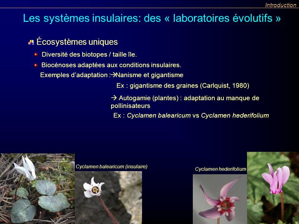 Introduction Les systèmes insulaires: des « laboratoires évolutifs » Autogamie (plantes) : adaptation au manque de pollinisateurs Ex : Cyclamen balear