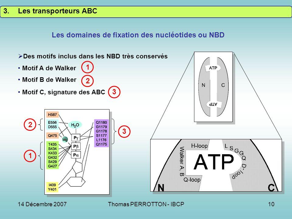 14 Décembre 2007Thomas PERROTTON - IBCP10 Des motifs inclus dans les NBD très conservés Motif A de Walker Motif B de Walker Motif C, signature des ABC Les domaines de fixation des nucléotides ou NBD 3.Les transporteurs ABC 1 1 2 3 2 3