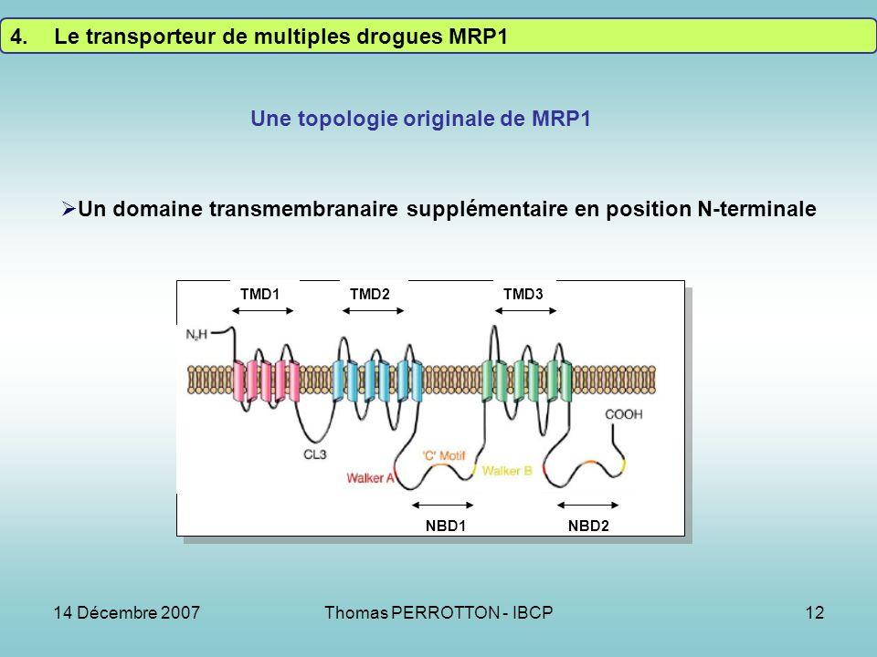 14 Décembre 2007Thomas PERROTTON - IBCP12 4.Le transporteur de multiples drogues MRP1 TMD1 TMD2TMD3 NBD1NBD2 Une topologie originale de MRP1 Un domaine transmembranaire supplémentaire en position N-terminale