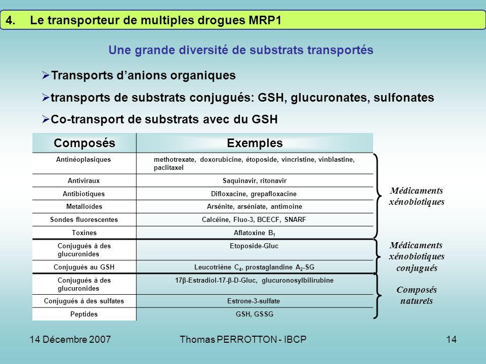 14 Décembre 2007Thomas PERROTTON - IBCP14 ComposésExemples Antinéoplasiquesmethotrexate, doxorubicine, étoposide, vincristine, vinblastine, paclitaxel AntivirauxSaquinavir, ritonavir AntibiotiquesDifloxacine, grepafloxacine MetalloïdesArsénite, arséniate, antimoine Sondes fluorescentesCalcéine, Fluo-3, BCECF, SNARF ToxinesAflatoxine B 1 Conjugués à des glucuronides Etoposide-Gluc Conjugués au GSHLeucotriène C 4, prostaglandine A 2 -SG Conjugués à des glucuronides 17β-Estradiol-17-β-D-Gluc, glucuronosylbilirubine Conjugués à des sulfatesEstrone-3-sulfate PeptidesGSH, GSSG Médicaments xénobiotiques Médicaments xénobiotiques conjugués Composés naturels Une grande diversité de substrats transportés 4.Le transporteur de multiples drogues MRP1 Transports danions organiques transports de substrats conjugués: GSH, glucuronates, sulfonates Co-transport de substrats avec du GSH