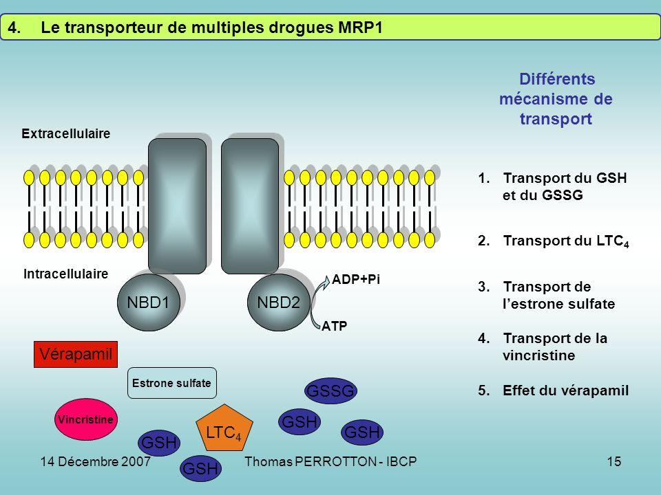 14 Décembre 2007Thomas PERROTTON - IBCP15 NBD1NBD2 Extracellulaire Intracellulaire ATP ADP+Pi 1.Transport du GSH et du GSSG 2.Transport du LTC 4 3.Transport de lestrone sulfate 4.Transport de la vincristine 5.Effet du vérapamil NBD1 NBD2 Différents mécanisme de transport Vérapamil GSH GSSG Vincristine LTC 4 Estrone sulfate GSH 4.Le transporteur de multiples drogues MRP1