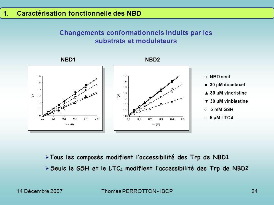 14 Décembre 2007Thomas PERROTTON - IBCP24 Changements conformationnels induits par les substrats et modulateurs NBD seul 30 μM docetaxel 30 μM vincristine 30 μM vinblastine 5 mM GSH 5 μM LTC4 NBD1NBD2 Tous les composés modifient laccessibilité des Trp de NBD1 Seuls le GSH et le LTC 4 modifient laccessibilité des Trp de NBD2 1.Caractérisation fonctionnelle des NBD