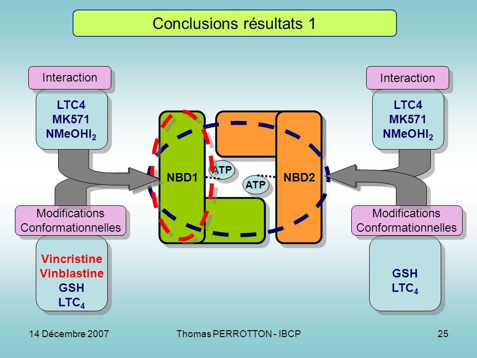 14 Décembre 2007Thomas PERROTTON - IBCP25 Conclusions résultats 1 NBD1 NBD2 ATP LTC4 MK571 NMeOHI 2 LTC4 MK571 NMeOHI 2 Vincristine Vinblastine GSH LTC 4 Vincristine Vinblastine GSH LTC 4 MK571 NMeOHI 2 LTC4 MK571 NMeOHI 2 GSH LTC 4 GSH LTC 4 Interaction Modifications Conformationnelles Modifications Conformationnelles Modifications Conformationnelles Modifications Conformationnelles