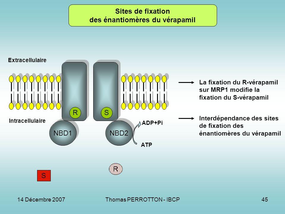 14 Décembre 2007Thomas PERROTTON - IBCP45 NBD1 NBD2 RS Extracellulaire Intracellulaire ADP+Pi R S Sites de fixation des énantiomères du vérapamil La fixation du R-vérapamil sur MRP1 modifie la fixation du S-vérapamil Interdépendance des sites de fixation des énantiomères du vérapamil ATP