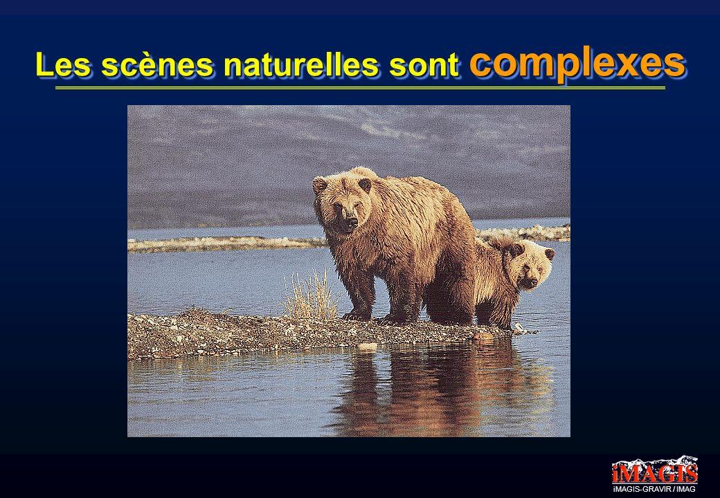 iMAGIS-GRAVIR / IMAG Les scènes naturelles sont complexes