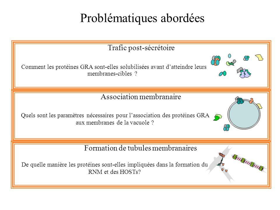 Problématiques abordées Trafic post-sécrétoire Comment les protéines GRA sont-elles solubilisées avant datteindre leurs membranes-cibles ? Association