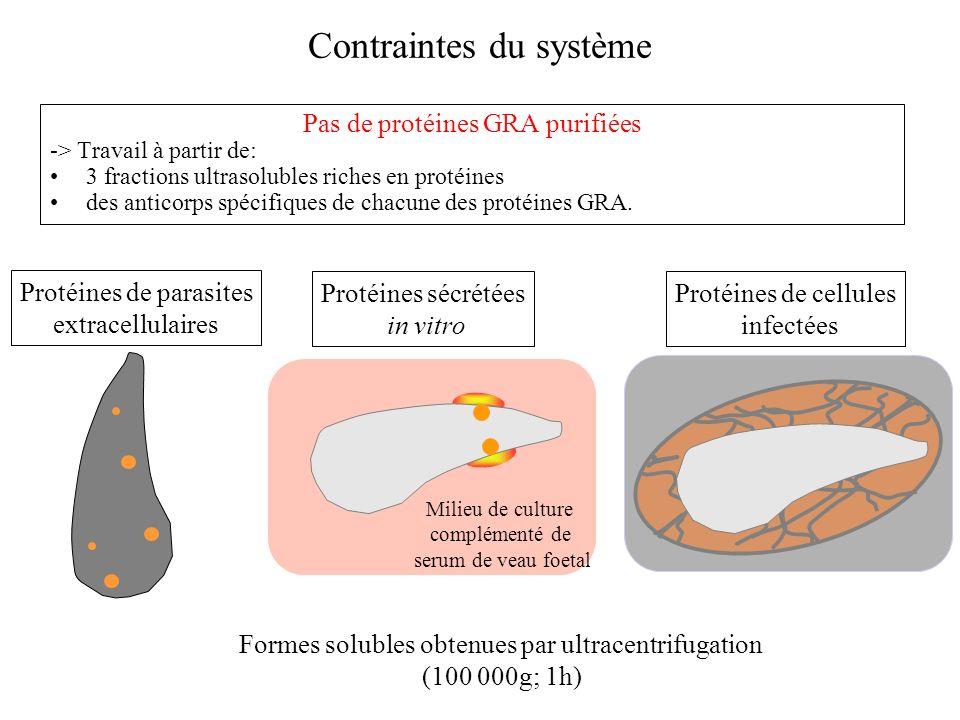 Contraintes du système Pas de protéines GRA purifiées -> Travail à partir de: 3 fractions ultrasolubles riches en protéines des anticorps spécifiques