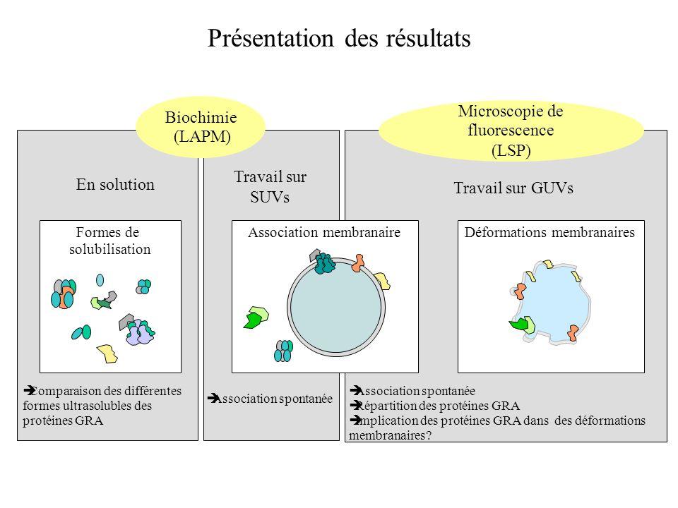 Présentation des résultats Formes de solubilisation Association membranaireDéformations membranaires Travail sur SUVs Travail sur GUVs Biochimie (LAPM