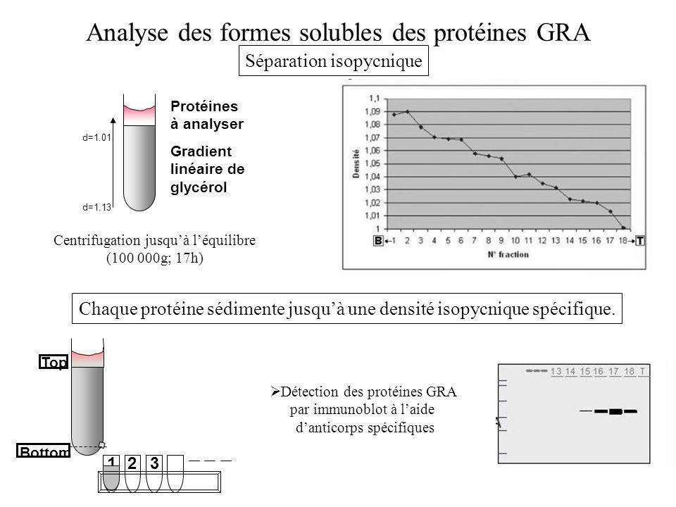 d=1.13 d=1.01 Protéines à analyser Gradient linéaire de glycérol Centrifugation jusquà léquilibre (100 000g; 17h) Analyse des formes solubles des prot