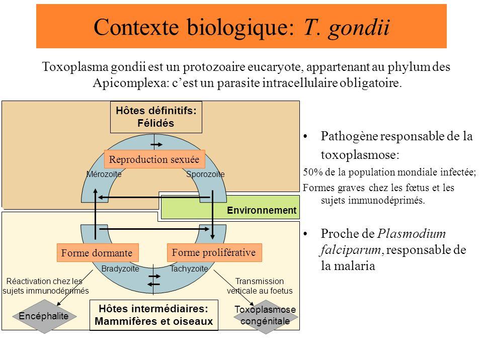 Contexte biologique: T. gondii Pathogène responsable de la toxoplasmose: 50% de la population mondiale infectée; Formes graves chez les fœtus et les s