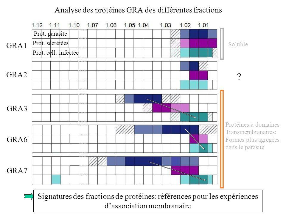 Analyse des protéines GRA des différentes fractions GRA1 GRA2 GRA3 GRA6 GRA7 Prot. parasite Prot. sécrétées Prot. cell. infectée Soluble Protéines à d