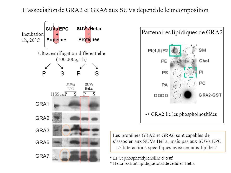 Lassociation de GRA2 et GRA6 aux SUVs dépend de leur composition Incubation 1h, 20°C Ultracentrifugation différentielle (100 000g, 1h) P S SUVs EPC +