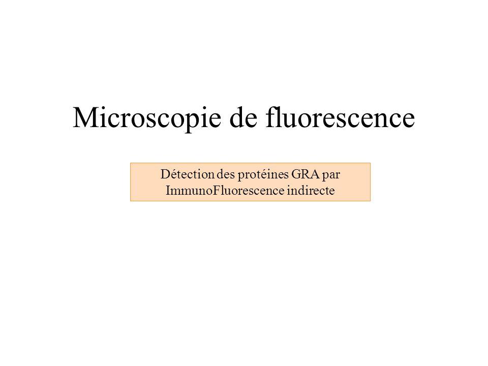 Microscopie de fluorescence Détection des protéines GRA par ImmunoFluorescence indirecte