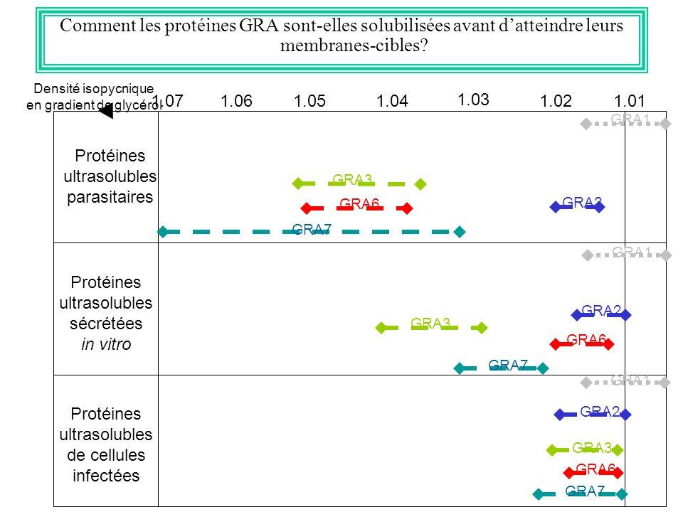 Comment les protéines GRA sont-elles solubilisées avant datteindre leurs membranes-cibles? 1.071.01 1.03 1.051.021.041.06 Protéines ultrasolubles para