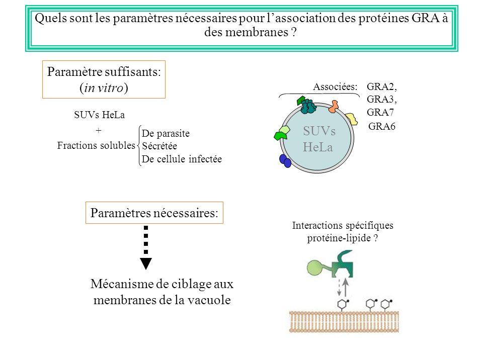 Quels sont les paramètres nécessaires pour lassociation des protéines GRA à des membranes ? Associées: GRA2, GRA3, GRA7 GRA6 SUVs HeLa Paramètre suffi