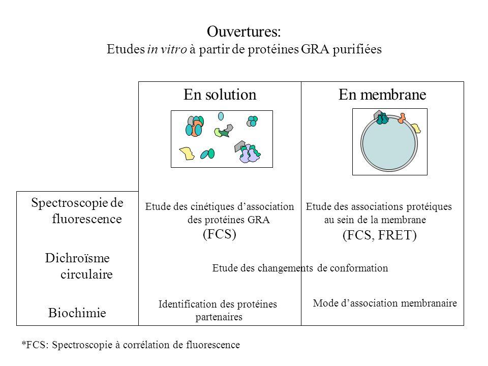Ouvertures: Etudes in vitro à partir de protéines GRA purifiées En solution Etude des cinétiques dassociation des protéines GRA En membrane Etude des