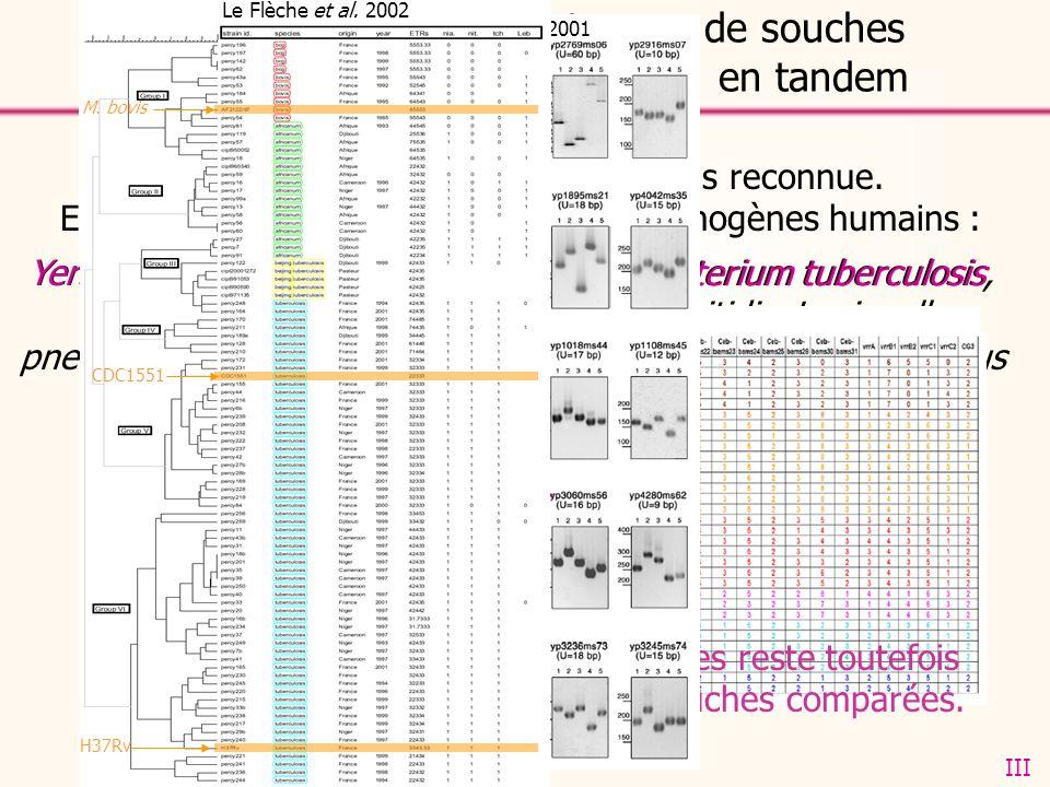 Conclusions sur le génotypage de souches bactériennes par les répétitions en tandem Lapproche MLVA est de plus en plus reconnue. Elle a déjà été valid