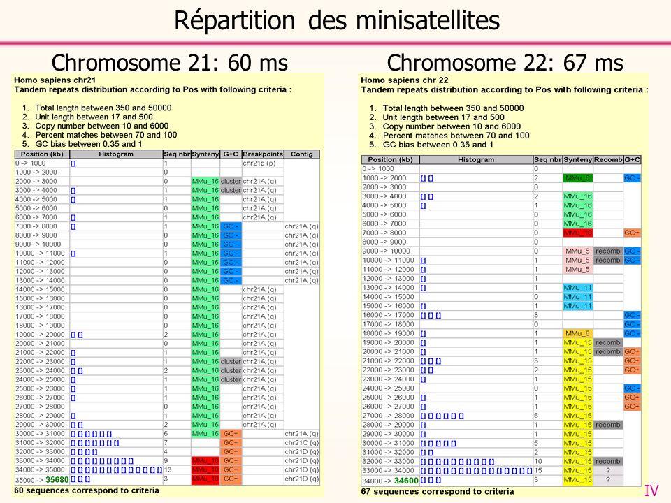 Chromosome 21: 60 msChromosome 22: 67 ms Répartition des minisatellites IV