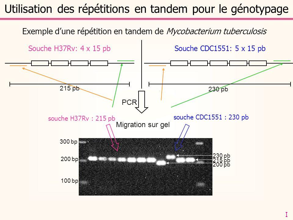 amorces PCR: CTCCCACACCCAGGACAC CGGCCTACCCAACATTCC 100 bp 200 bp 300 bp Migration sur gel Souche CDC1551: 5 x 15 pbSouche H37Rv: 4 x 15 pb souche CDC1551 : 230 pb souche H37Rv : 215 pb 230 pb 215 pb Exemple dune répétition en tandem de Mycobacterium tuberculosis 215 pb 230 pb Utilisation des répétitions en tandem pour le génotypage PCR 200 pb I