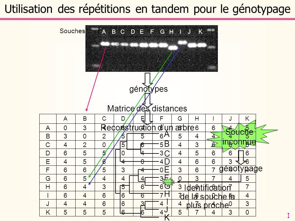 Marqueurs Souches A B C D E F G H I J K Matrice des distances Reconstruction dun arbre A B C D E F G H I J K Souche inconnue génotypage Identification
