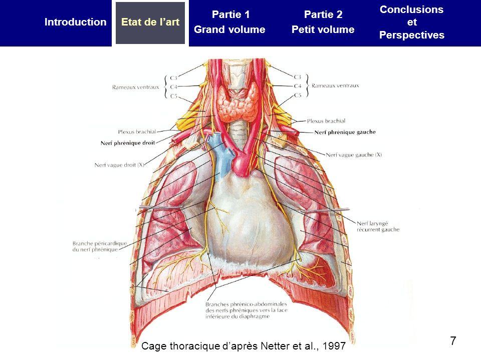 7 IntroductionEtat de lart Partie 1 Grand volume Partie 2 Petit volume Conclusions et Perspectives Cage thoracique daprès Netter et al., 1997