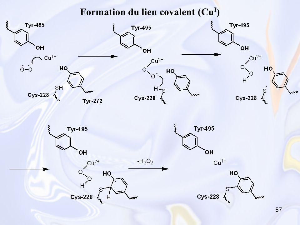 57 Formation du lien covalent (Cu I )