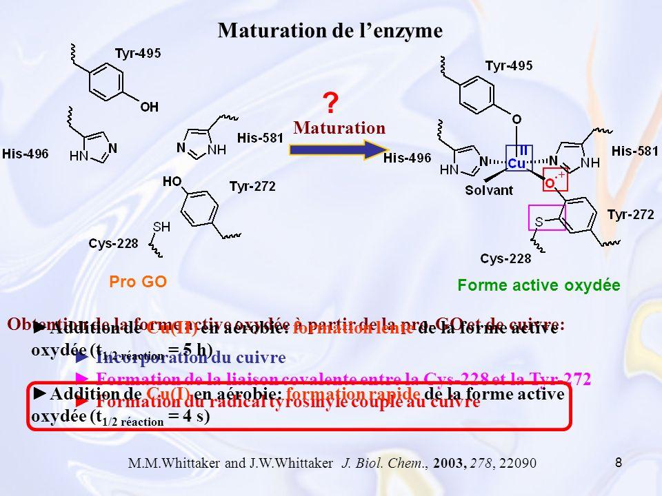 8 Obtention de la forme active oxydée à partir de la pro-GO et de cuivre: Incorporation du cuivre Formation de la liaison covalente entre la Cys-228 e