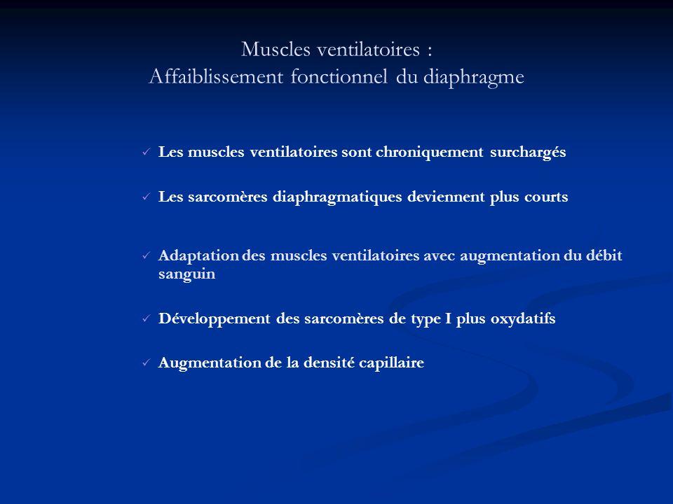 Les effets sur la tolérance à lexercice Muscles squelettiques: acidose lactique précoce qui entraîne un arrêt de lexercice.