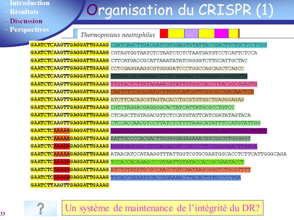 Introduction Résultats Discussion Perspectives 33 Organisation du CRISPR (1) DR Verminephrobacter eiseniae : 294 DRs exactement identiques Un système