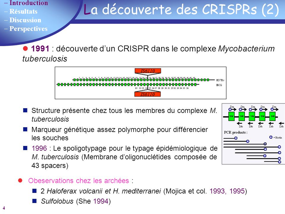 Introduction Résultats Discussion Perspectives 45 Création dun nouveau CRISPR Les essaimages de CRISPRs Un seul groupe de gènes associés Le même DR (quelques déviations parfois) Spacers différents Hypothèse : structure minimale transposée formée dun leader et un DR DR Discussion
