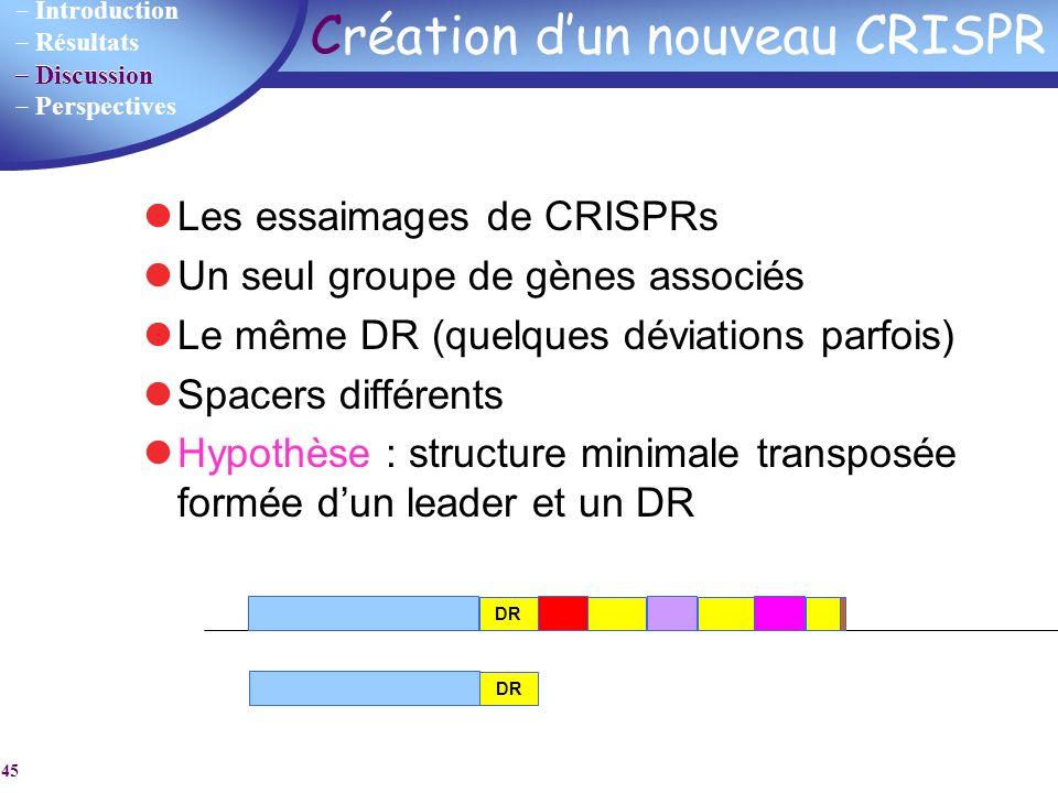 Introduction Résultats Discussion Perspectives 45 Création dun nouveau CRISPR Les essaimages de CRISPRs Un seul groupe de gènes associés Le même DR (q