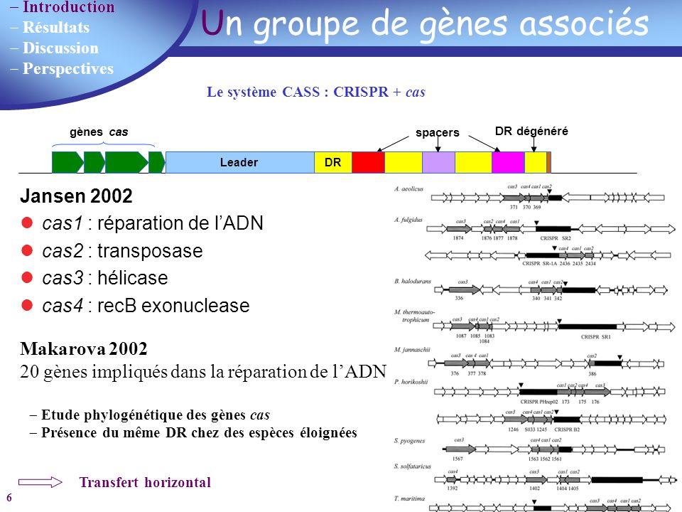 Résultats Discussion Perspectives 6 Un groupe de gènes associés DR Leader spacers DR dégénéré gènes cas Le système CASS : CRISPR + cas Jansen 2002 cas