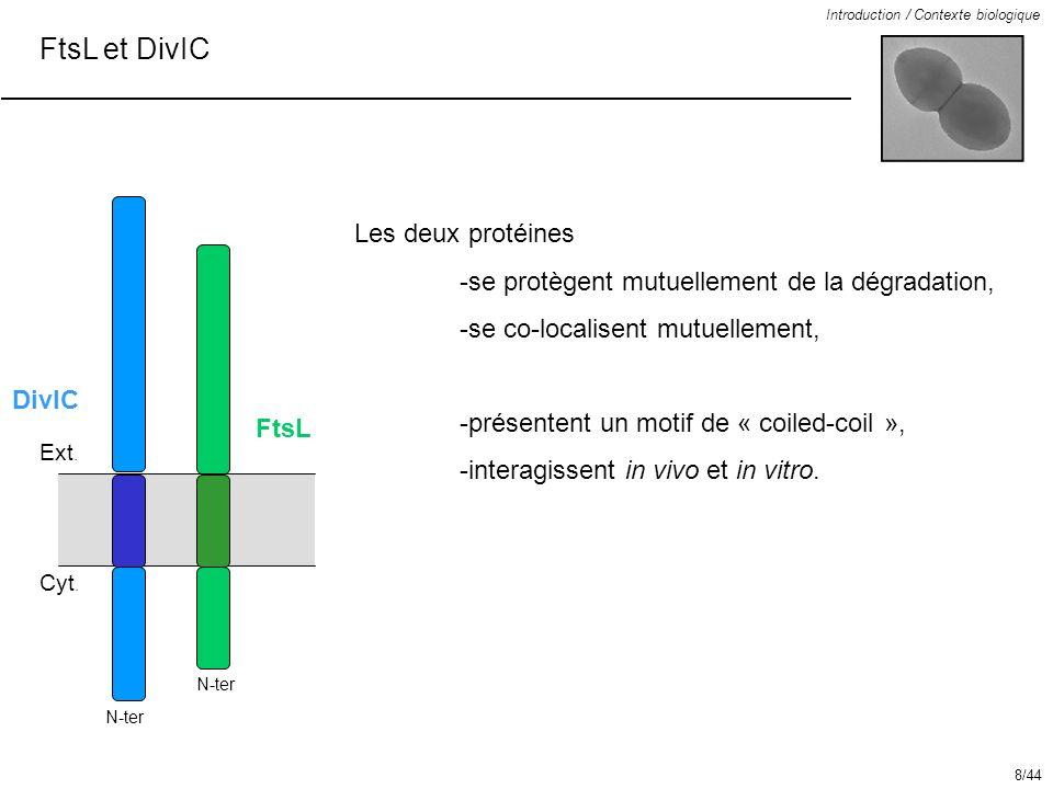 FtsL et DivIC Introduction / Contexte biologique 23 aa Les deux protéines -se protègent mutuellement de la dégradation, -se co-localisent mutuellement